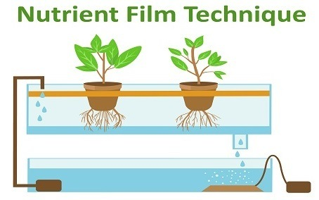 Nutrient Film Technique (NFT)