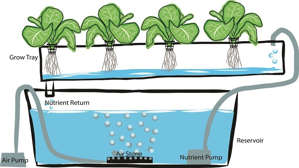 Hydroponics Guide: Learn How To Grow Plants Without Soil