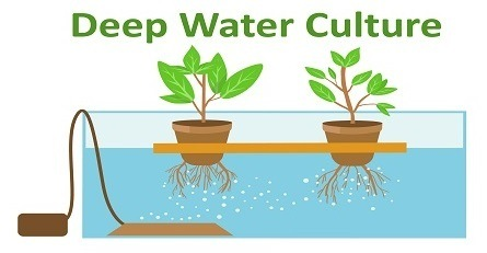 Hydroponics Raft System (Deep Water Culture)