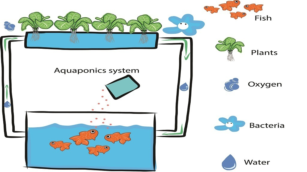 How to Build a DIY (Do It Yourself) Aquaponics System | 2019 ... Aquaponics Small Home Designs on small home aquaculture, small grow kits, small home farm, small home growing, small home composting, small home community, small home orchard, small home design, small home homesteading, small home products, small home gardening, small home water purification, small home ponds, small home technology, small home diy, small home solar power, small home architecture, small home sustainable development, small home nursery, small home aquarium,