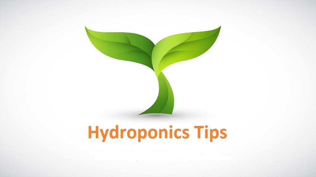 Hydroponics tips
