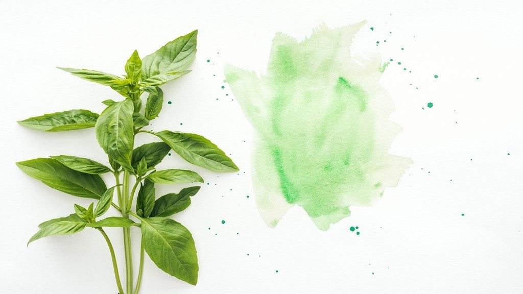Grow Hydroponic Basil